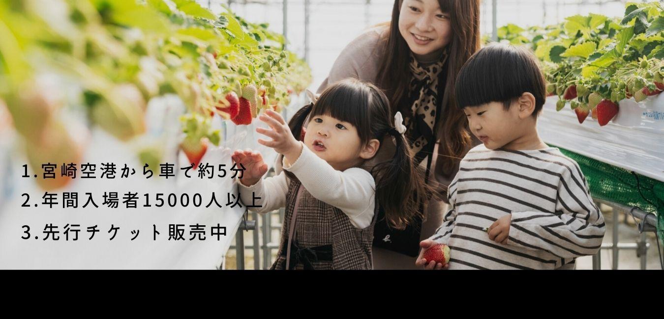 """日本""""初""""認定いちごマイスター長友一平が地元宮崎で作る【ひなたいちご園】"""